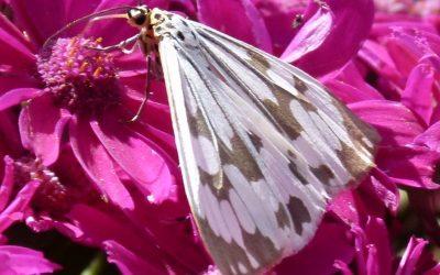 Lass Deine Aufmerksamkeit ruhen, wie ein Schmetterling auf einer Blüte.